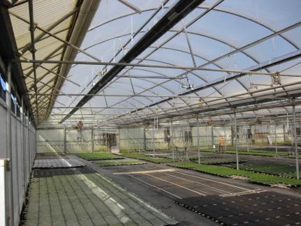 Green house heating for plug grower Cal Seedling Co.
