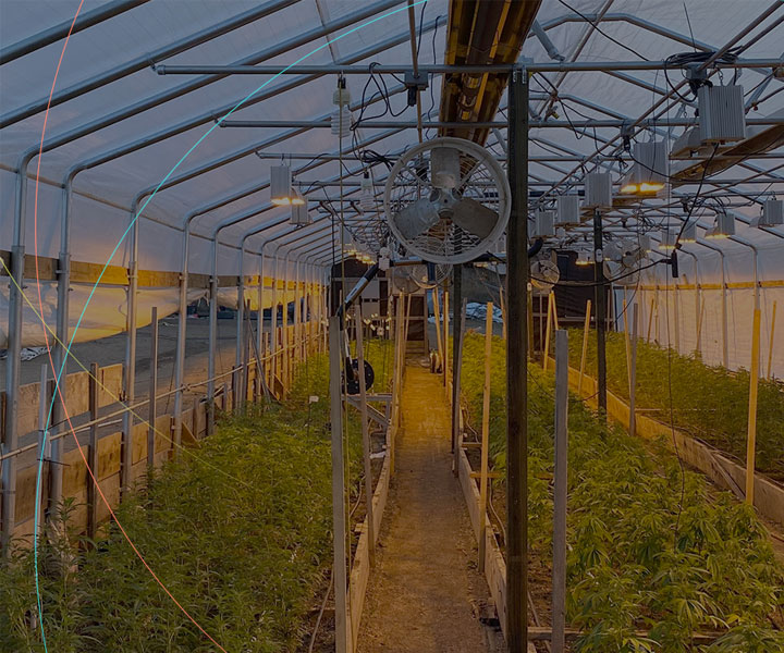 home-slider-cannabis-sm