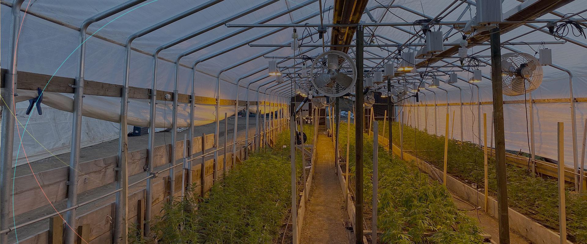 home-slider-cannabis